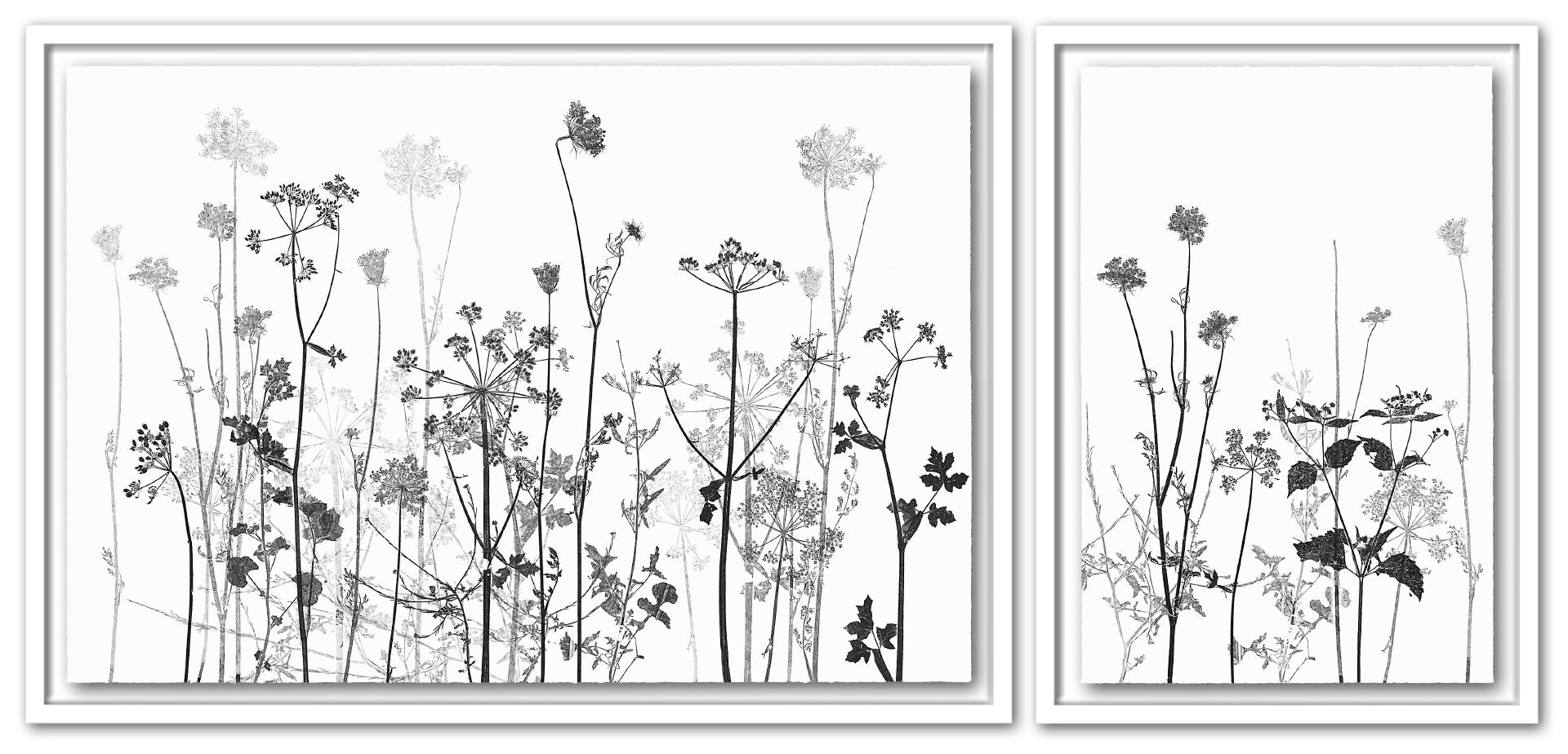 e.a. ... AM WEGESRAND | Unikat | 2-teilig | Monoprint von Wildblumen | 73 x 157 cm [gerahmt] | 2020