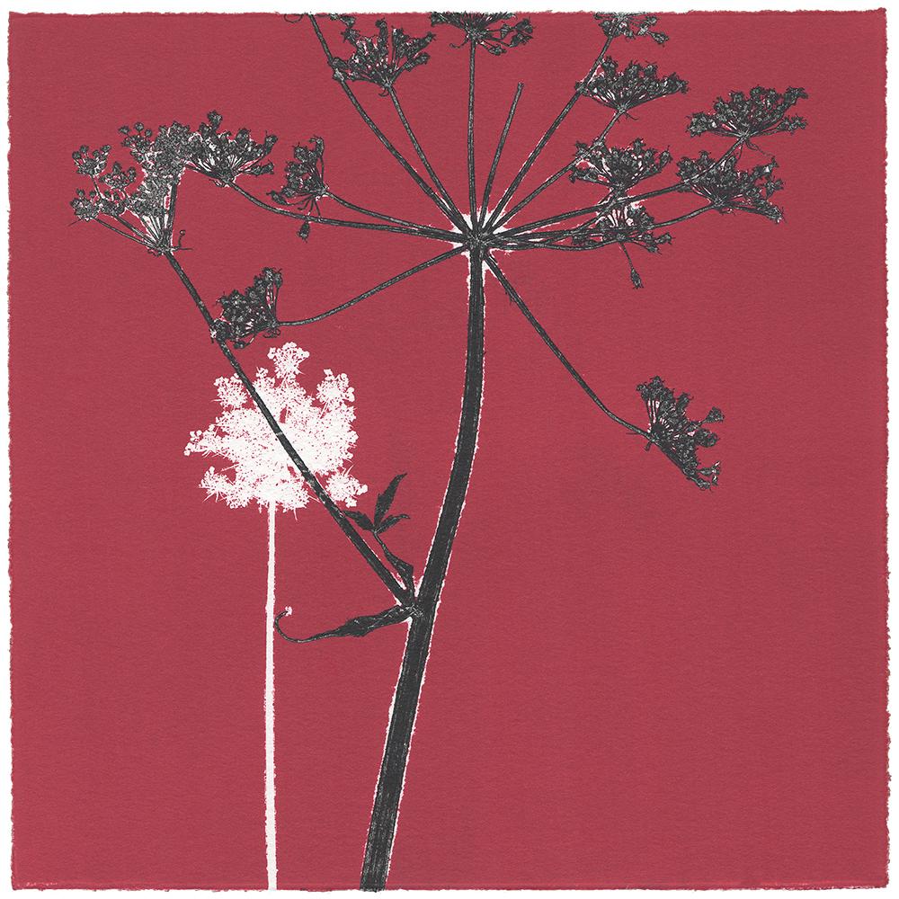 19/60 VIELFALT AM WEGESRAND | Einzelgrafik einer 60-teiligen Arbeit | Unikat | Monoprint von Wildblumen | 20 x 20 cm | 2020
