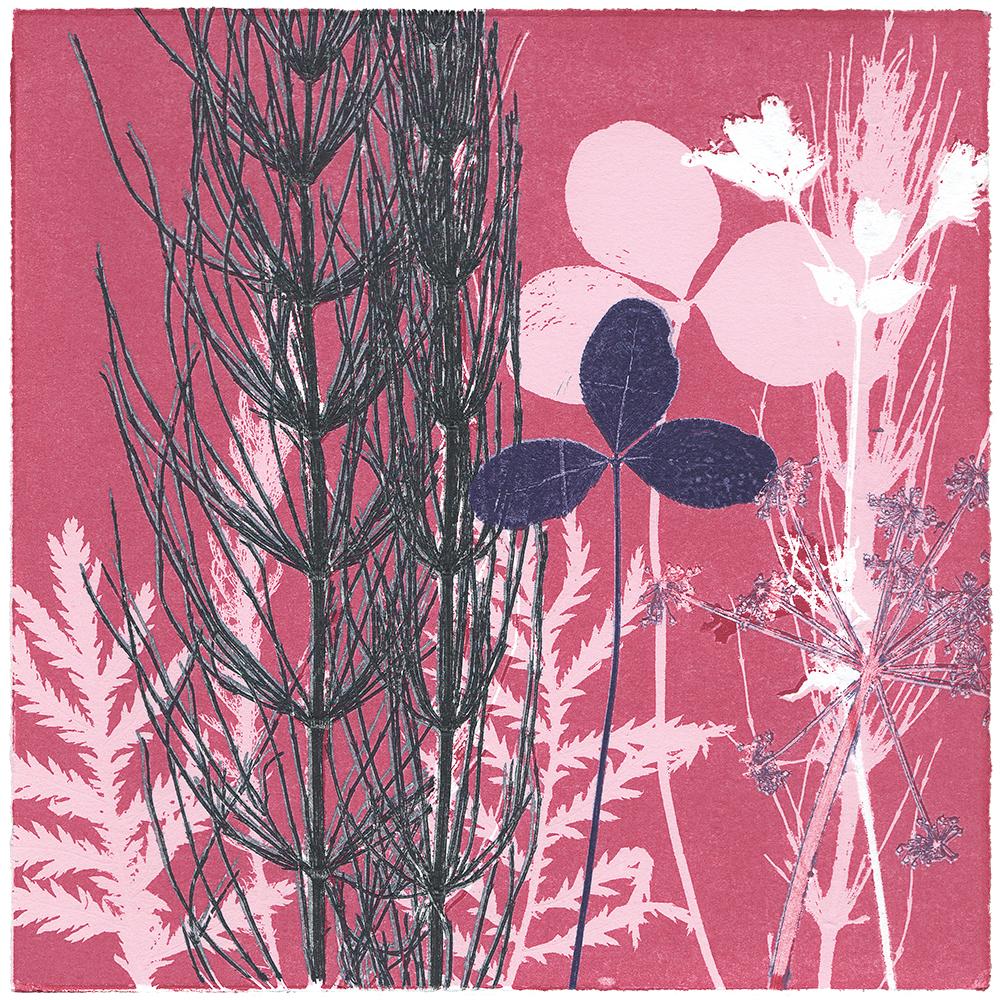 23/60 VIELFALT AM WEGESRAND | Einzelgrafik einer 60-teiligen Arbeit | Unikat | Monoprint von Wildblumen | 20 x 20 cm | 2020