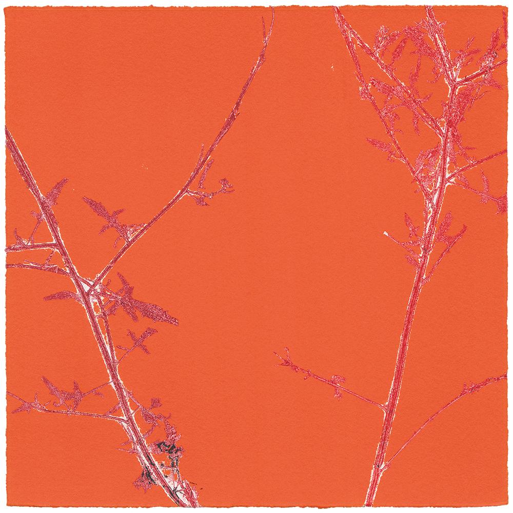 27/60 VIELFALT AM WEGESRAND | Einzelgrafik einer 60-teiligen Arbeit | Unikat | Monoprint von Wildblumen | 20 x 20 cm | 2020