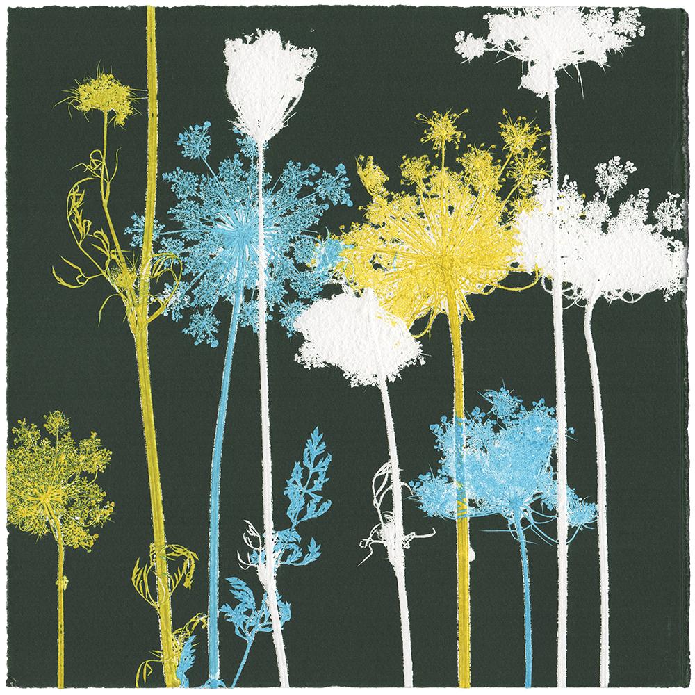 WILDE MÖHRE 1 | Unikat | Monoprint von Wildblumen | 20 x 20 cm | 2020