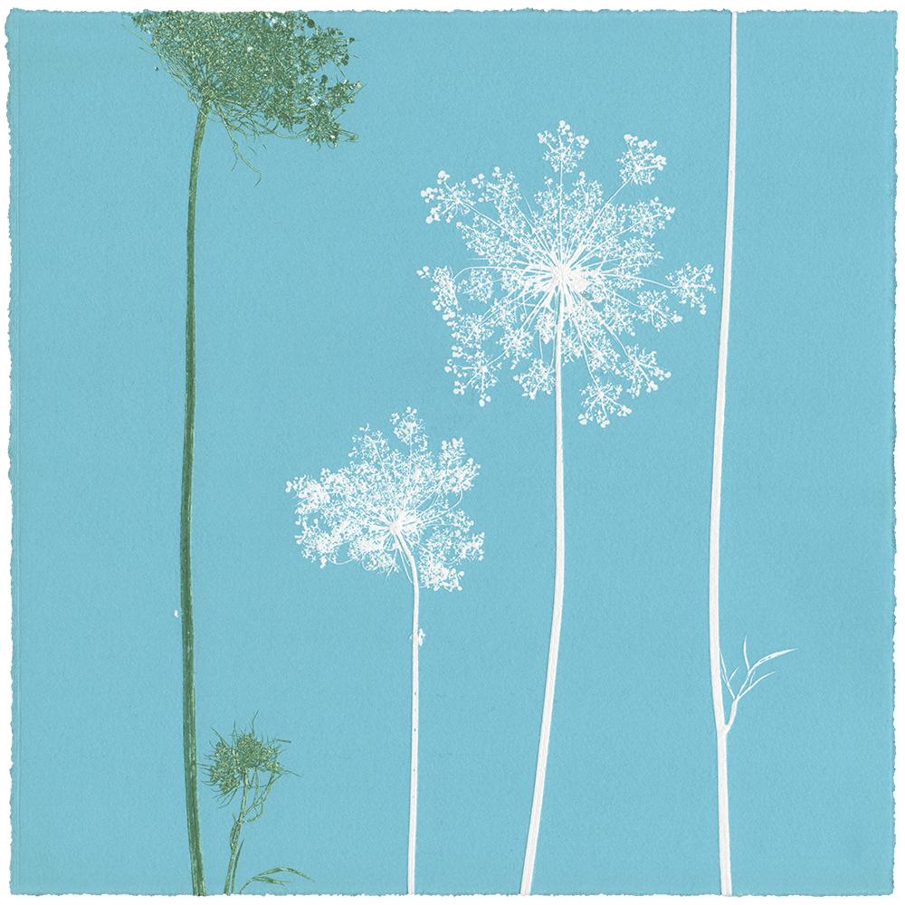 WILDE MÖHRE 5 | Unikat | Monoprint von Wildblumen | 20 x 20 cm | 2020