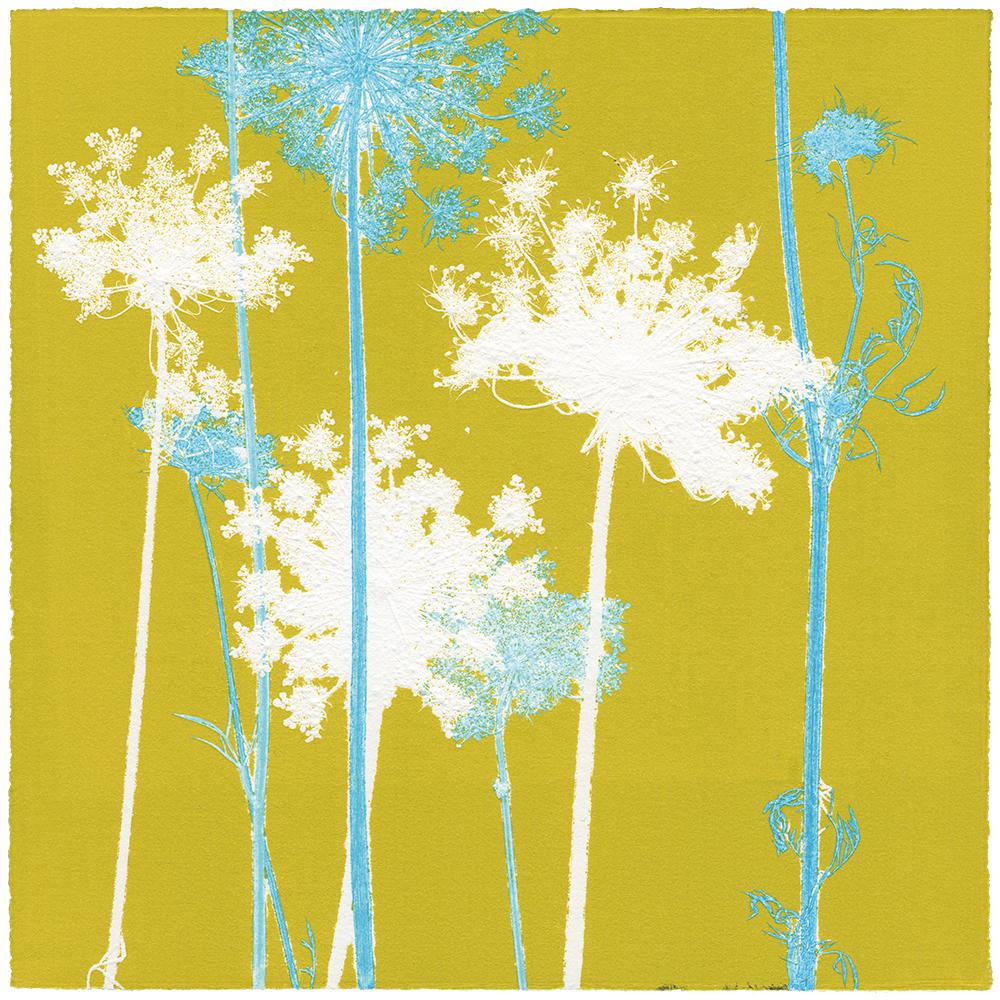 WILDE MÖHRE 8 | Unikat | Monoprint von Wildblumen | 20 x 20 cm | 2020