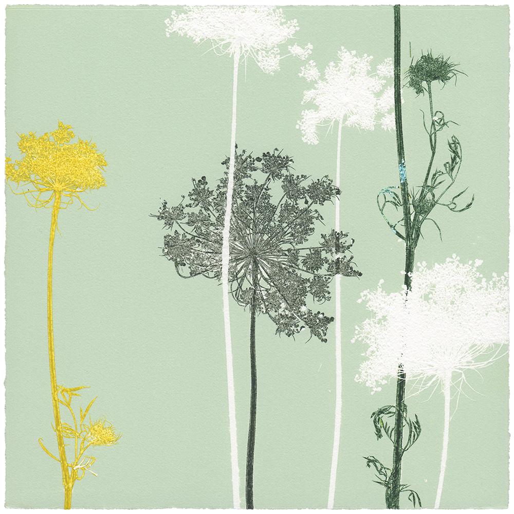 WILDE MÖHRE 9 | Unikat | Monoprint von Wildblumen | 20 x 20 cm | 2020